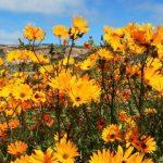 Namaqualand, Namaqualand: colours flourish into technicolour magic., SA Ventures