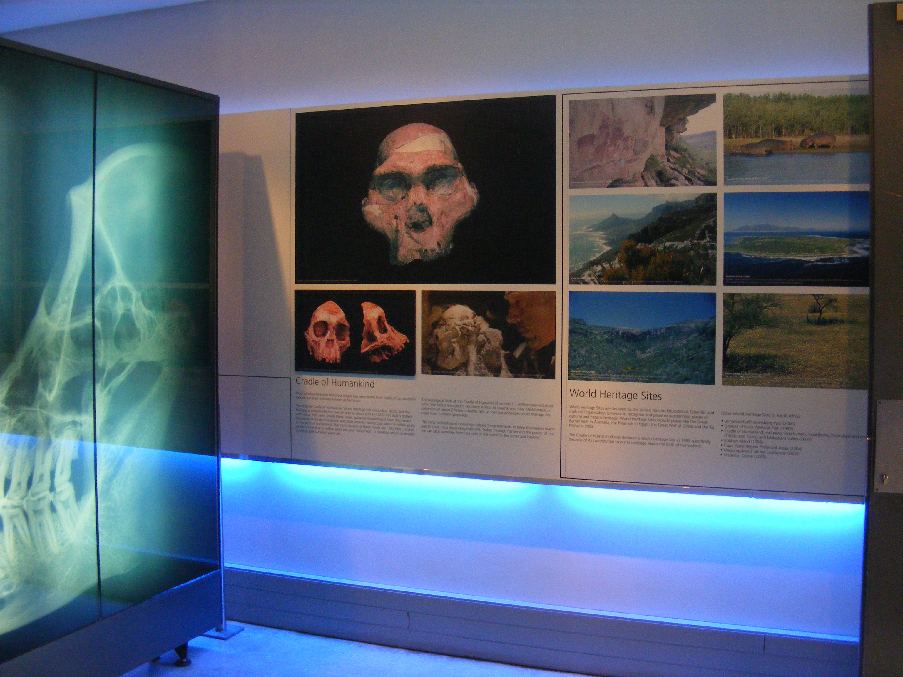 Cradle of Humankind, The Cradle of Humankind: back to our roots…or fossils, SA Ventures