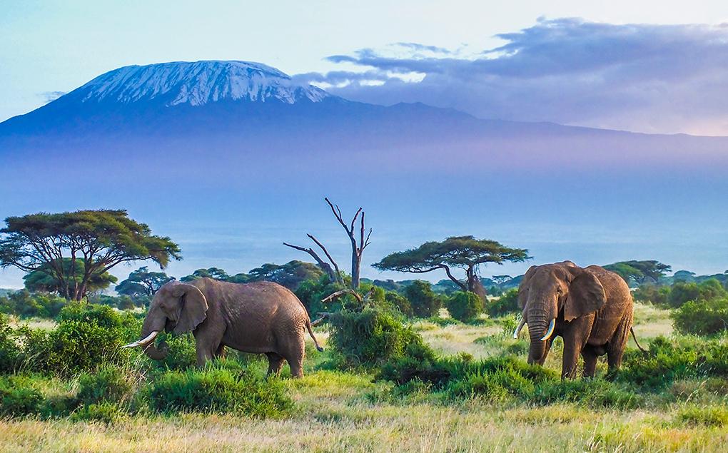 Tanzania, Tanzania, SA Ventures